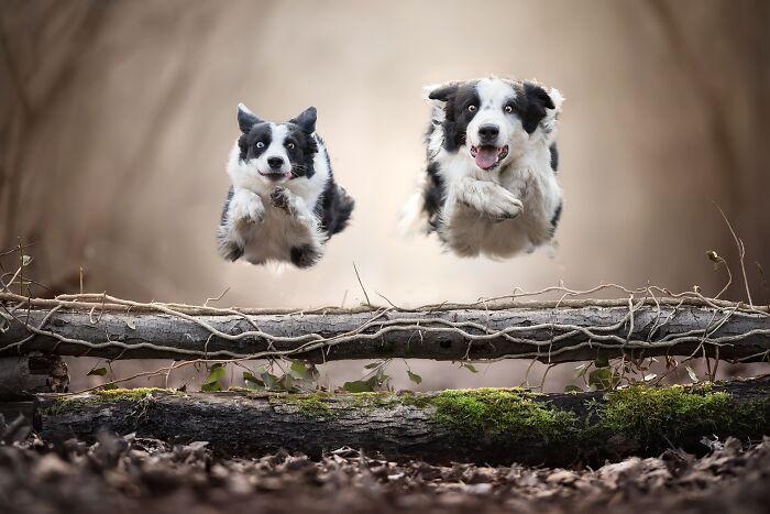 Mejores amigos (1º en Naturaleza y animales / Mascotas)