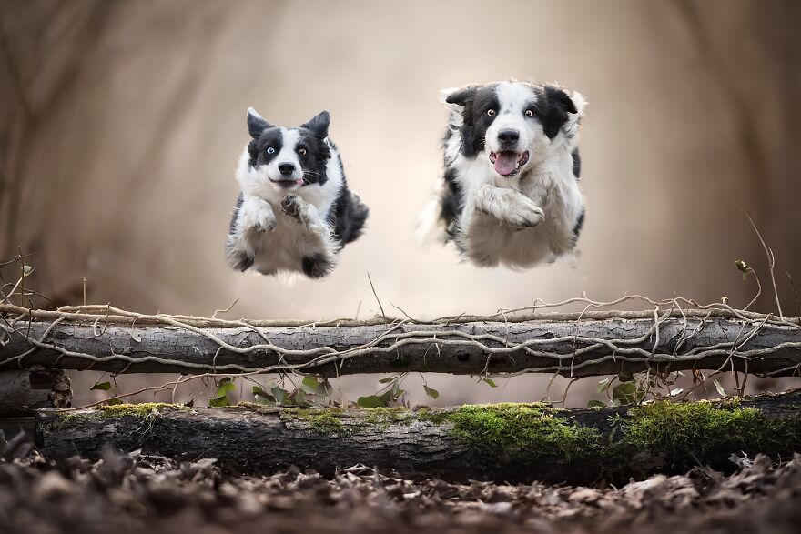 Best Friends (Professional Nature & Animals/Pets Category, 1st Place)
