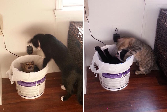 My Cats Keep Pushing Each Other In My Trash Can