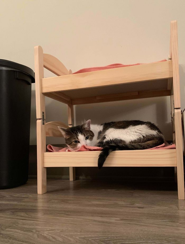 A Hack For Pet Owners. I Took The Duktig Doll Bed And Converted Into A Cat Bunk Bed