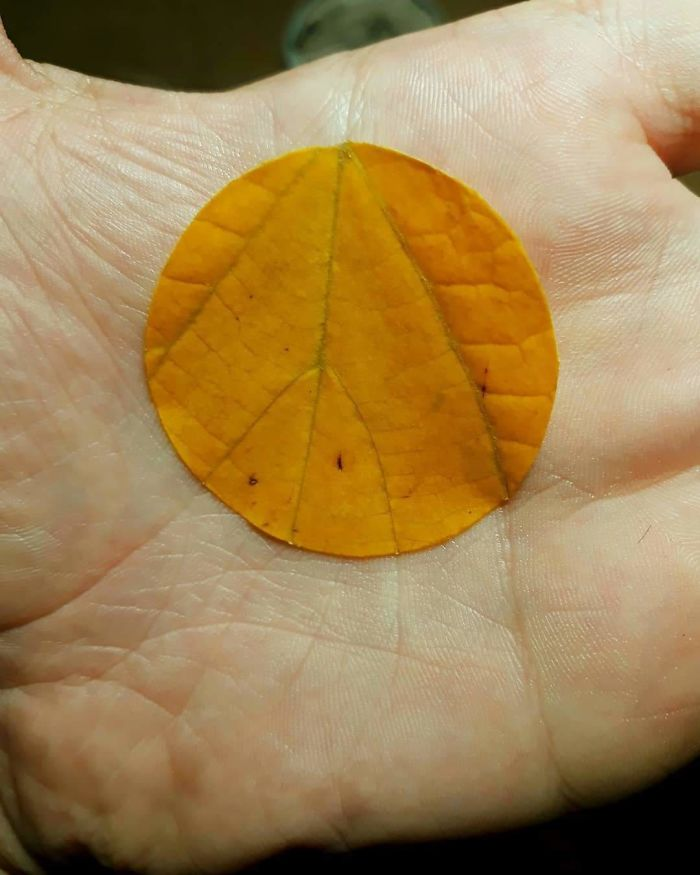 The Way The Veins Of The Leaf Align On The Creases Of The Hand