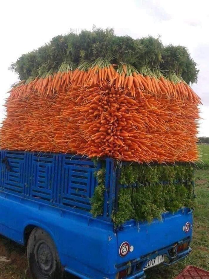 Amazingly Well-Stacked Carrots On A Pickup