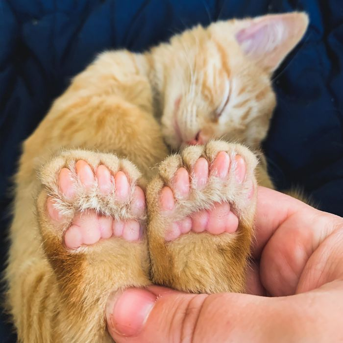 Ren Is A Polydactyl With 6 Toes On Each Foot