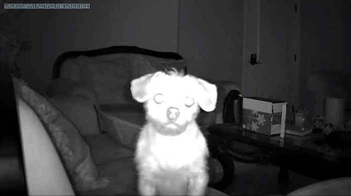Woke Up In The Middle Of The Night To A Notification That My Security Camera Detected Motion. Cue Instant Heart Attack