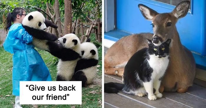 If You Think The World Is Terrible, These 50 Animal Friendships Might Change Your Mind