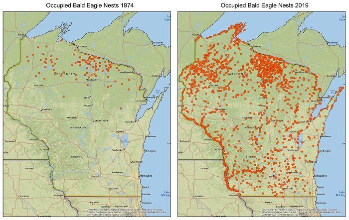 Wisconsin'de İşgal Edilmiş Kel Kartal Yuvaları.  1974 vs. 2019. Temiz Su Yasası ile Kazanılan Büyüme