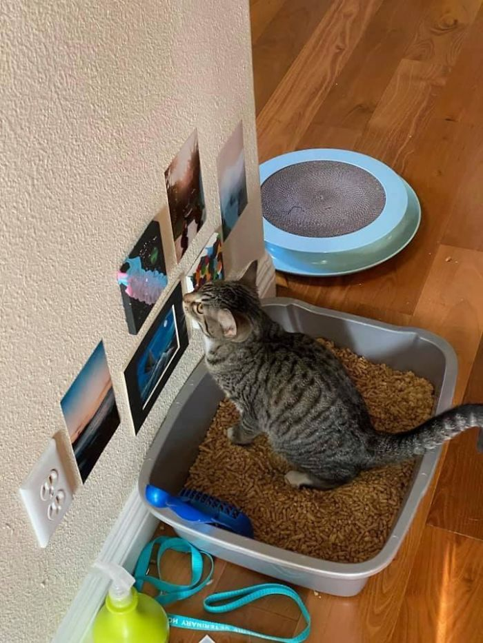 A Friend Of Mine Has Bathroom Art For Their Cat