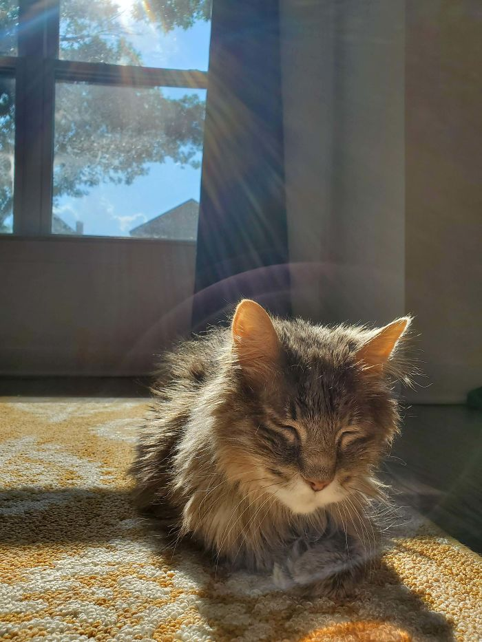 Didn't Plan The Photo This Way, Gizmo Was Just A Heavenly Cat...