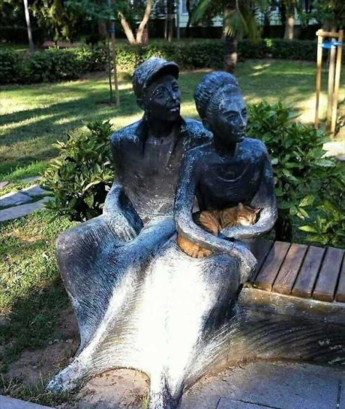 This Cat Fits Perfectly In This Statues Lap