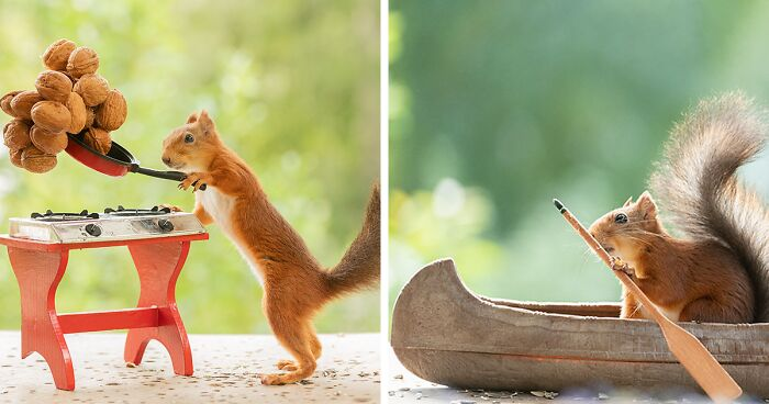 Red Squirrels Interact With My Props While I Photograph Them, And They Make The Cutest Pics (163 New Pics)