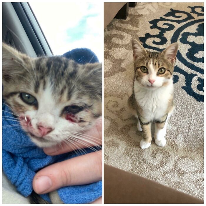 My Friend Found Her Alone In The Road And Saved Her Life. Here Is What 4 Months Of Love Did For Her Once We Adopted Our New Baby Arya.