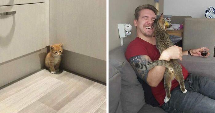 50 Fotos muy reconfortantes de mascotas rescatadas en el mes de Octubre