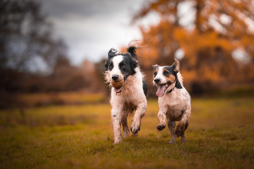 Gizmo And Bailey