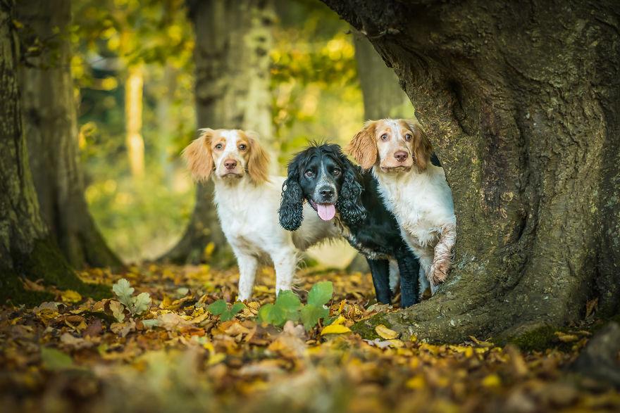 Fizz, Lexie And Tilda