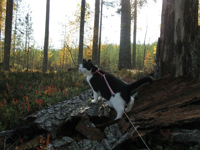 This Is Minttu, She Loves Travelling And Outdoorsy Adventures