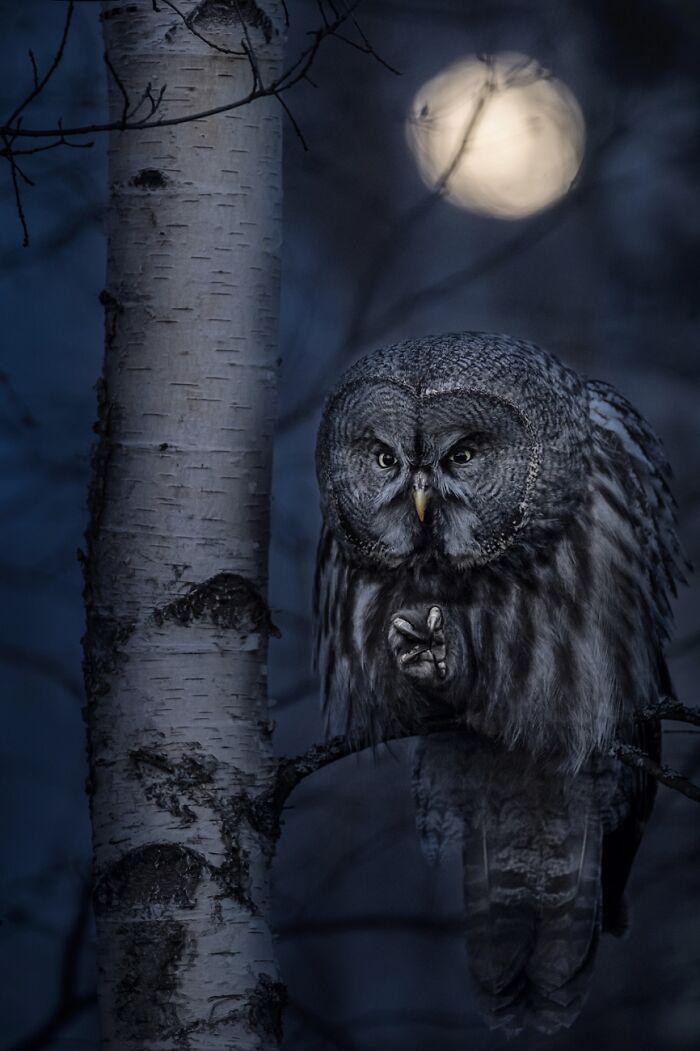 Cazador nocturno (1º en Animales en su hábitat)
