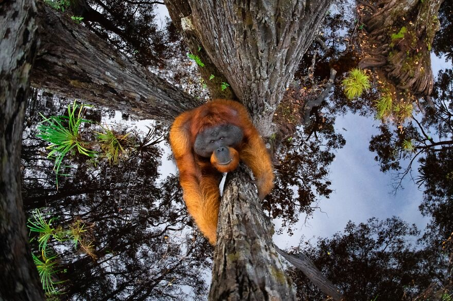 The World Is Going Upside Down (2nd Place In Animals In Their Environment Category)