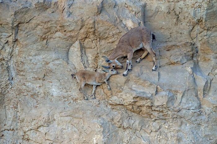 Cuidados maternos (Mención de honor en Animales en su hábitat)