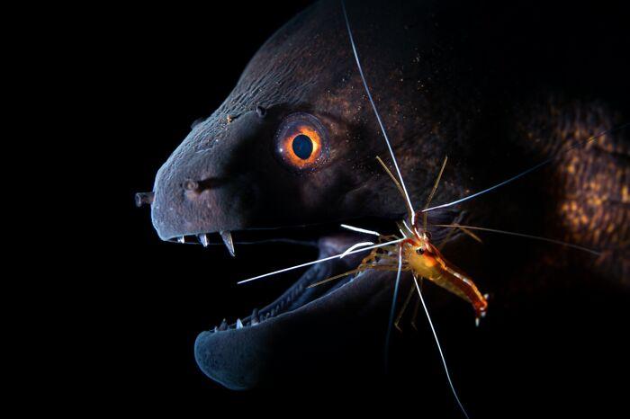 Dentista (Animales en su hábitat)
