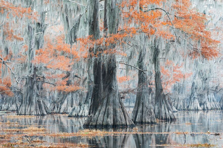 Spanish Moss (2nd Place In The Beauty Of Nature Category)