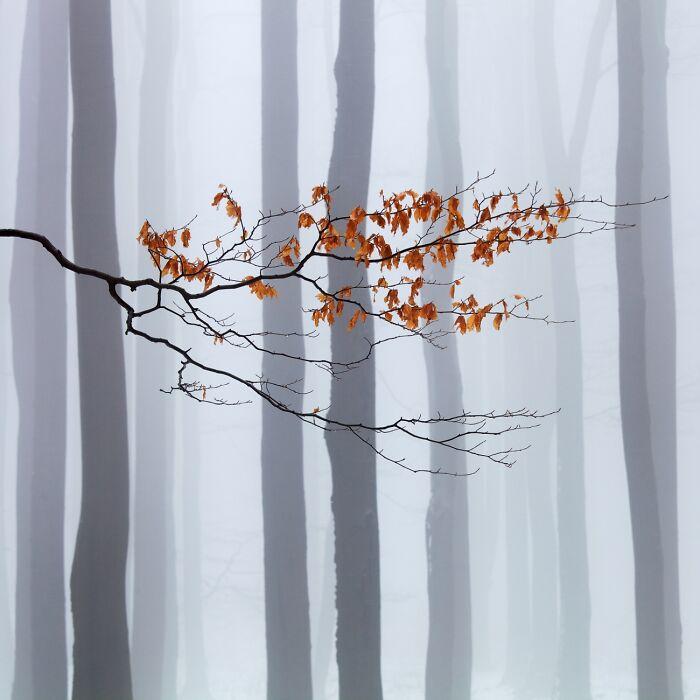 Esperando al invierno (Mención de honor en Belleza natural)