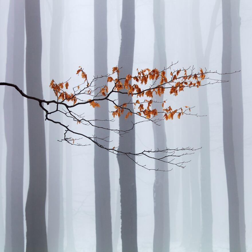 Waiting For Winter (Honorable Mention In The Beauty Of Nature Category)