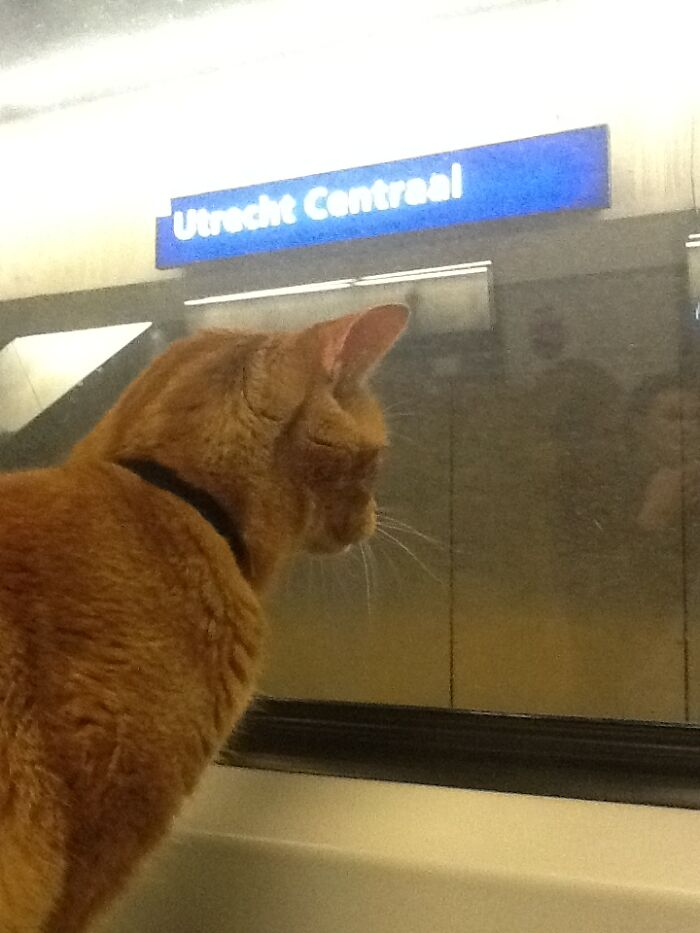 My Retired Service Cat Has His Own Photocollection Of Central Stations (Utrecht, The Netherlands)