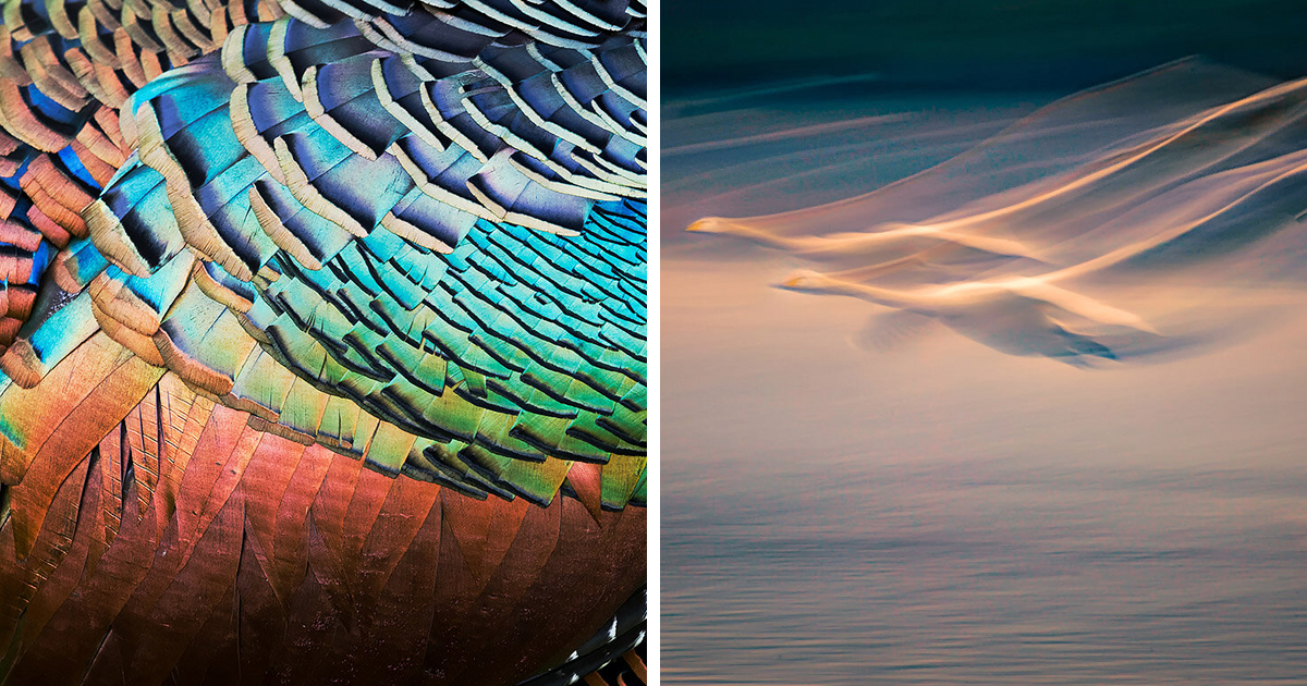 The 49 Winning Photos Of The 2020 Bird Photographer Of The Year Competition