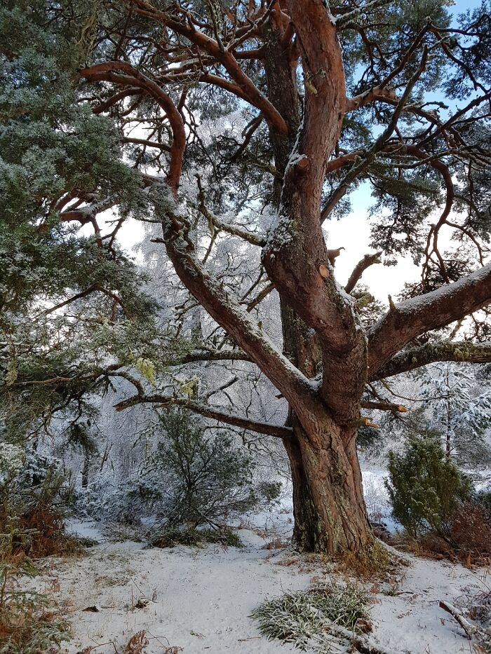 This Tree Bear Aviemore, Highlands, Scotland