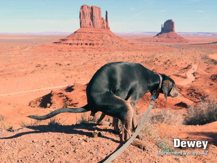 calendar-2021-pooping-pooches-dogs-5f8de