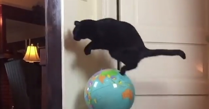 This Cat Leaps Into The Air Each Time She Goes Over This Exact Same Spot In The House