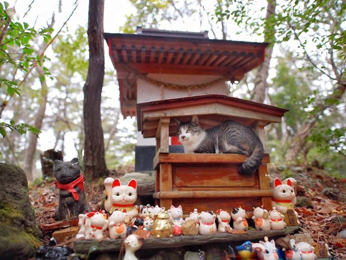 People Can't Get Enough Of These Pics Capturing Cats Taking Shelter From The Rain Under A Sacred Japanese Cat Shrine 10