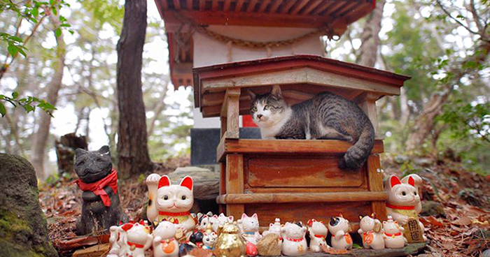 People Can't Get Enough Of These Pics Capturing Cats Taking Shelter From The Rain Under A Sacred Japanese Cat Shrine