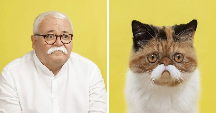 Photographer Takes Pictures Of Cats And Humans That Are Doppelgangers (17 Pics)