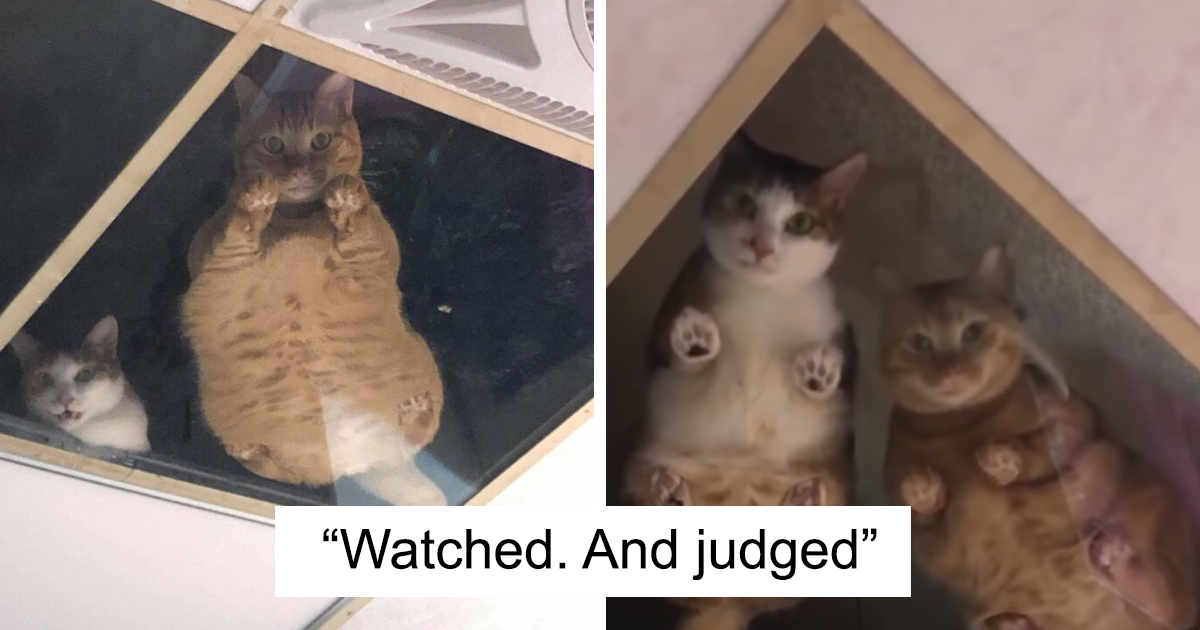 This Shop Owner Installed A Glass Ceiling For His Cats And Now They Won't Stop Staring At Him