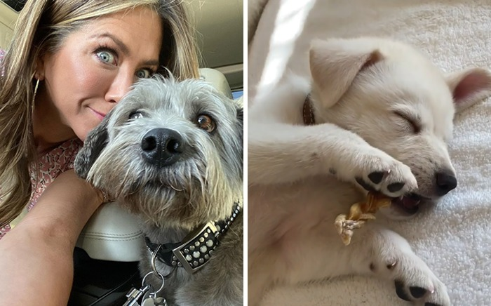 Jennifer Aniston & Clyde And Lord Chesterfield