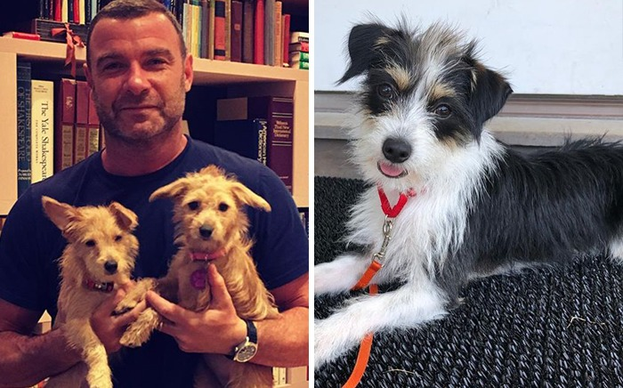 Liev Schreiber & Woody, Willow And Scout