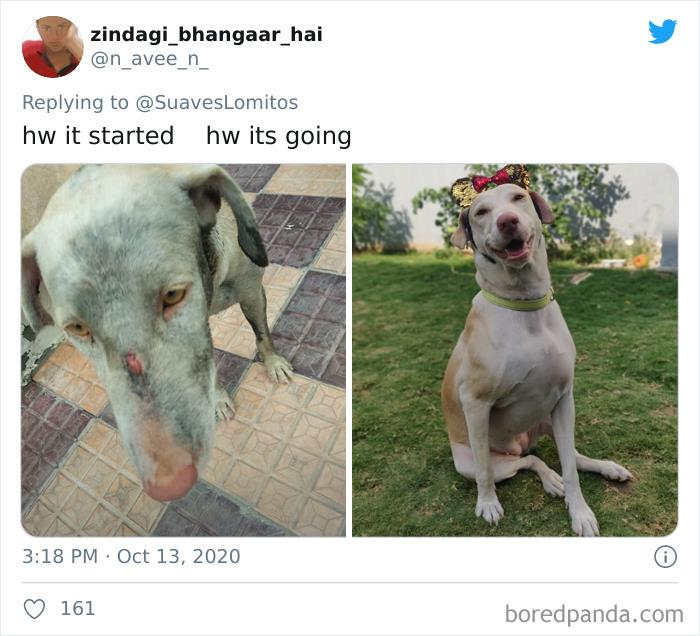 45 Of The Best Reactions Pet Owners Had To The 'How It Started Vs. How It Ended' Meme Challenge