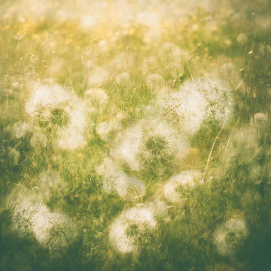 Finalist | Plants & Fungi