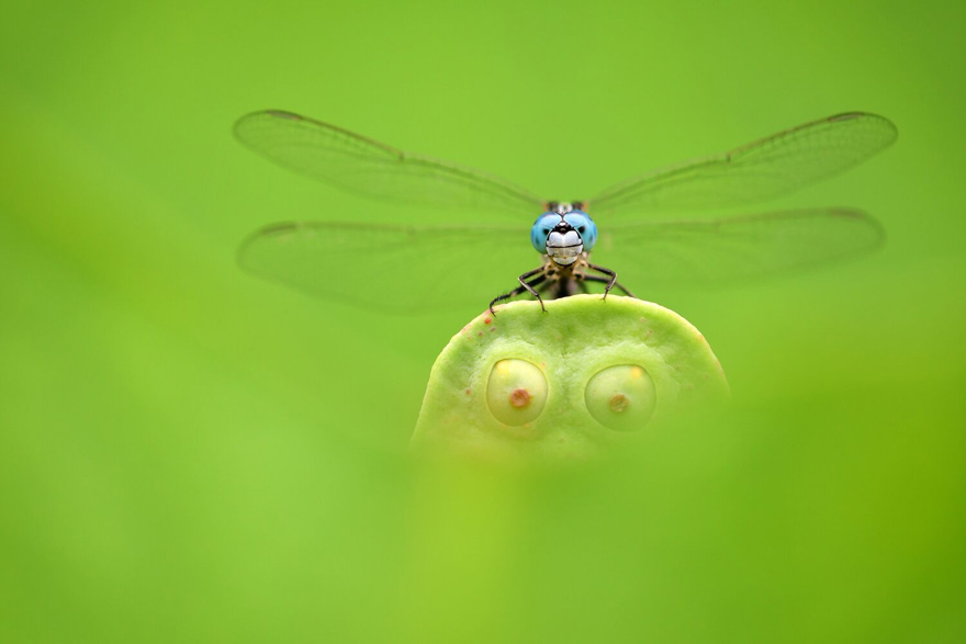 Finalist | Insects