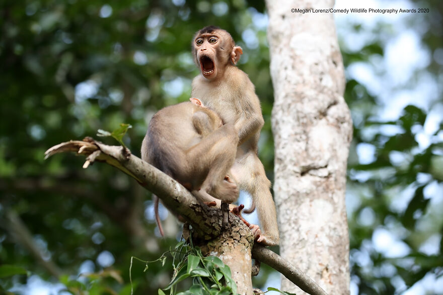 """Highly Commended: """"Monkey Business"""" By Megan Lorenz"""