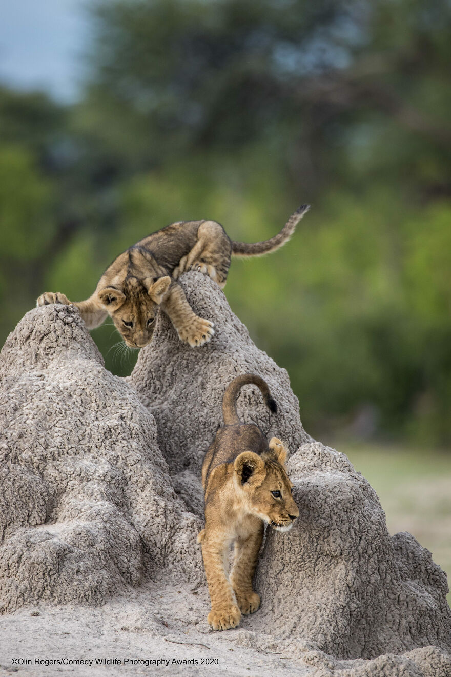 """Think Tank Photo Junior Award Winner: """"I've Got You This Time!"""" By Olin Rogers"""