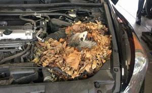 50 Times Car Mechanics Took Pics Of What They Were Dealing With So Others Would Believe Them