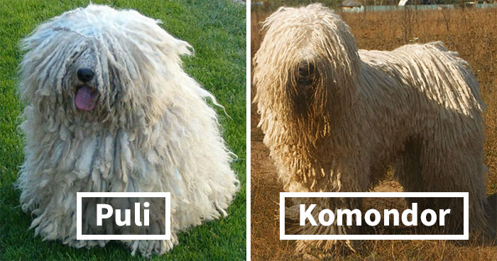 30 Well-Known Dog Breeds People Often Confuse And Their Differences Explained