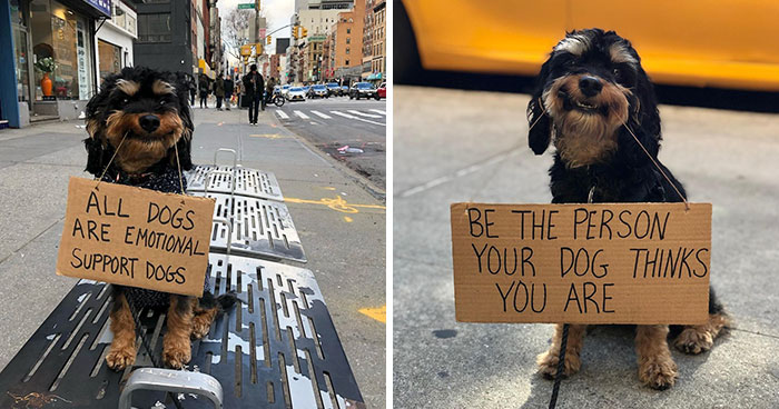 36 Funny Protest Signs From 'Dog With Sign' Who Has 174k Followers (New Pics)