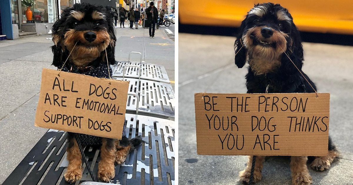 Dog Protests Annoying Everyday Things With Funny Signs (36 New Pics)