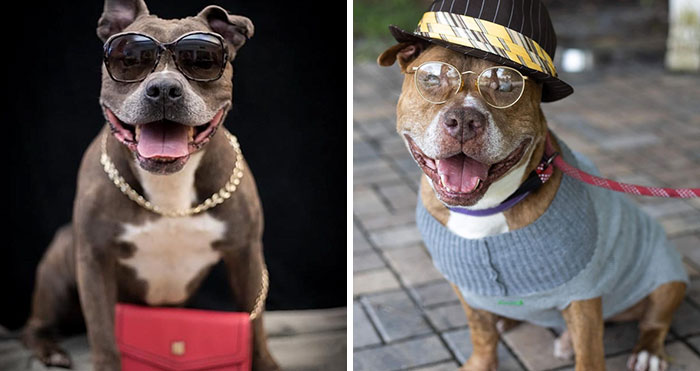 This Shelter Dressed Up Elderly Cats And Dogs As If They Were Senior Citizens For An Adoption Photoshoot (37 Pics)