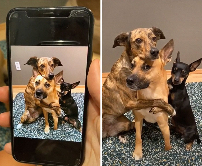 Videos Of Owner Showing Dogs A Photo And Them 'Recreating It' Go Viral