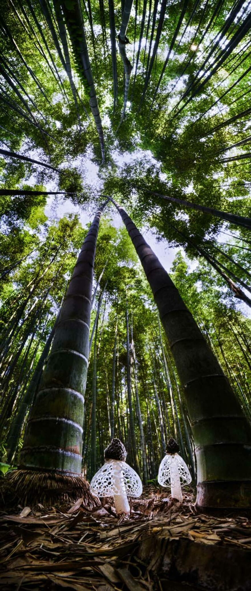 """Category Plants And Fungi: """"Spirits Of The Bamboo Forest"""" By Agorastos Papatsanis (Gr)"""