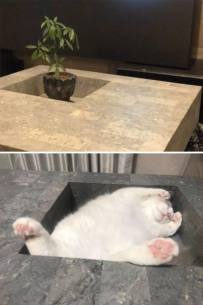 Coffee Table: Expectation vs. Reality